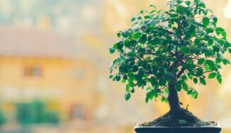 How to plant a cool digital bonsai tree on your computer screen in Ubuntu